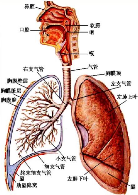 注意!这些急性化学物中毒性呼吸系统疾病也是职业病